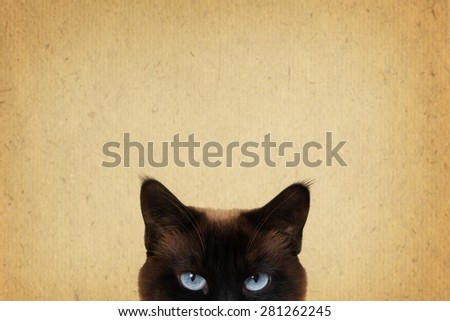 blue cat eyes peeking and vintage style background with copy space                            - stock photo
