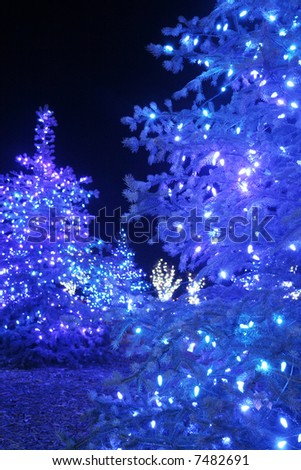 Blue christmas trees - stock photo