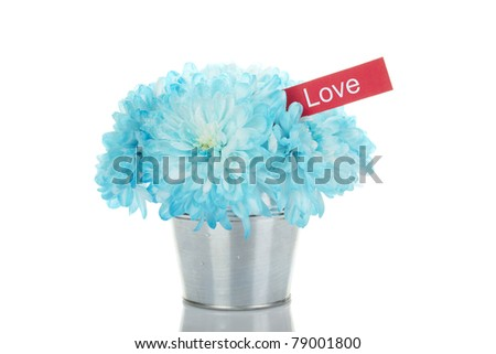 "Blue chrysanthemums in a bucket in the colors of card with the text ""love. "" Isolated"