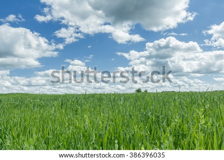 Blue cloudy sky above farm green oat and pea field - stock photo