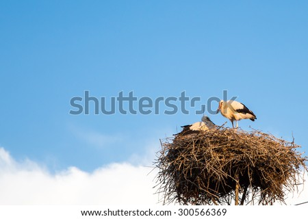 Blue cloudy sky background with young white storks at the nest. Copyspace - stock photo