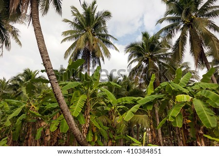 Blue cloudy sky through green palm trees