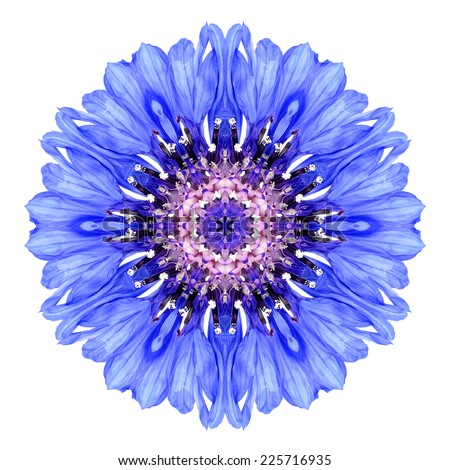 Blue Cornflower Mandala Flower. Kaleidoscope of Centaurea cyanus Isolated on White Background. Beautiful Natural Mirrored pattern