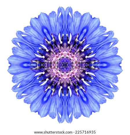 Blue Cornflower Mandala Flower. Kaleidoscope of Centaurea cyanus Isolated on White Background. Beautiful Natural Mirrored pattern - stock photo