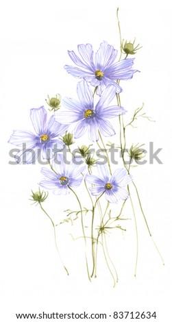 Blue cosmic flower 1 - stock photo