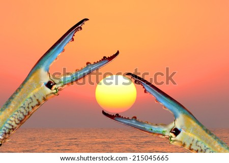 Blue crab claws at see sunset  - stock photo