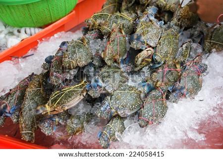 Blue Crabs - stock photo