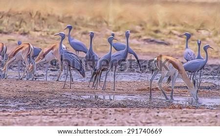 Blue cranes at Etosha National Park waterhole. Photo art - stock photo