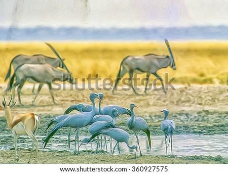 Blue cranes drinking at Etosha waterhole,digital oil painting - stock photo