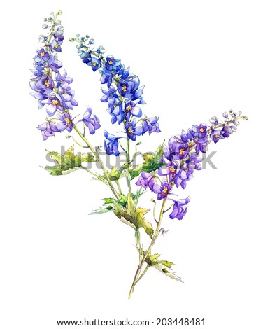 Blue Delphinium Flowers Garland. Watercolor hand painting, - stock photo