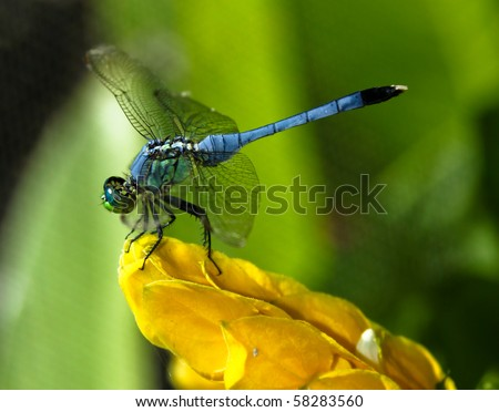 blue dragon fly - stock photo