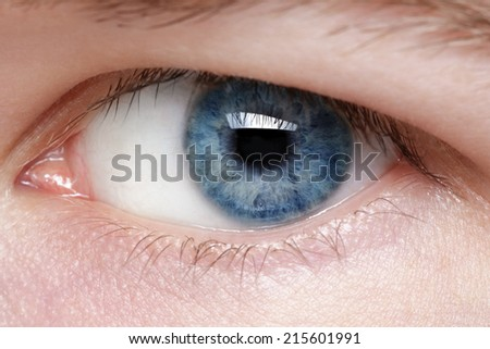 blue eye of young man, close up macro photo - stock photo