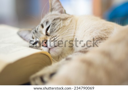 Blue eyed domestic cat lying on open book. Very shallow depth of field. - stock photo