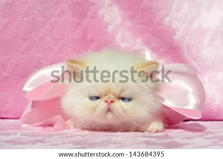 blue-eyed kitten on the pink background