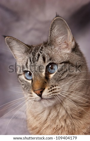 Blue Eyes 2 - stock photo