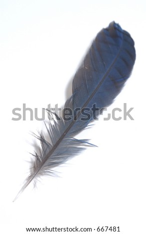 Blue Feather - stock photo