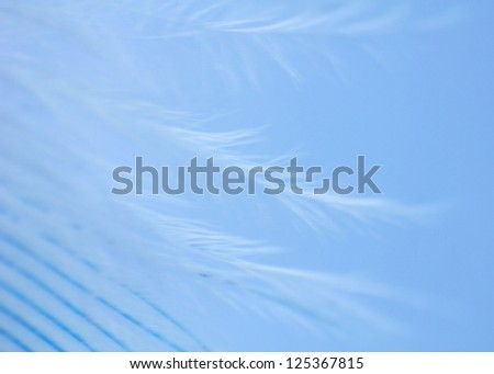 Blue feather close up - stock photo
