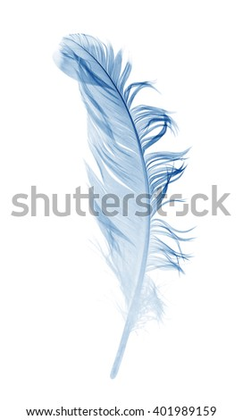 blue feather isolated on a white background - stock photo