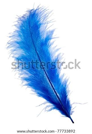 Blue feather isolated on white background - stock photo