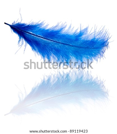 Blue feather with reflection on white background - stock photo