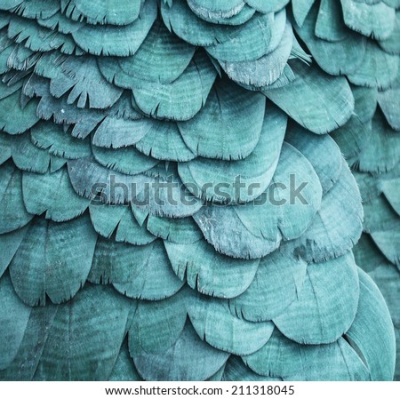 Blue feathers background - stock photo