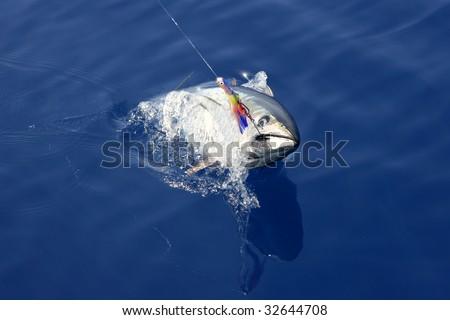 Blue fin tuna Mediterranean big game fishing and release - stock photo