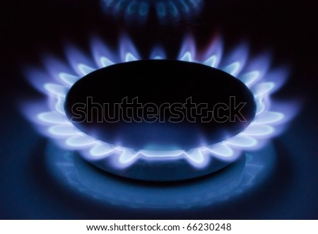 Blue flames of a burning natural gas. Gas cooker in action. - stock photo