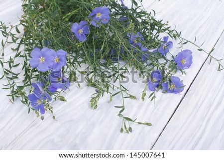 Blue flax flowers with buds on a wooden table - stock photo