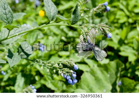 Blue flower and white butterflies on green background