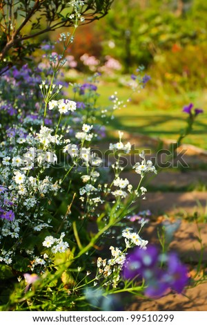 blue flower background . - stock photo
