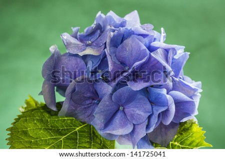 Blue flower in green background - stock photo