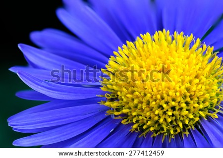 Blue Flower Macro - stock photo