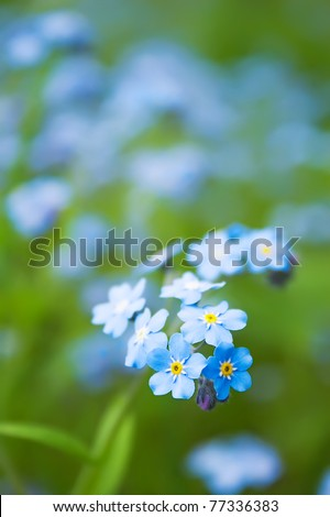 Blue flower on the green dim background