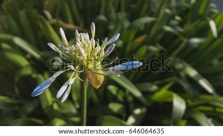 Blue flower with green leave background