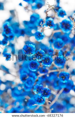 blue flowers - stock photo