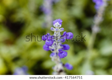 Blue Flowers at Rama IX Park Bangkok, Thailand - stock photo