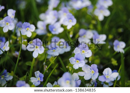 blue flowers details - stock photo