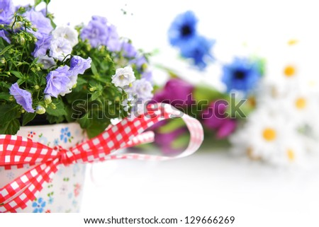 blue flowers in  flower pot and other flowers - stock photo
