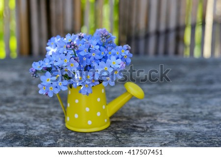 Blue flowers in vase. Forget me not in watering can on old wood table. Holidays nature card.