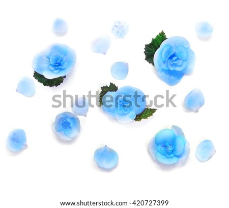 Blue flowers on white background. Flat lay. Frame. Top view.
