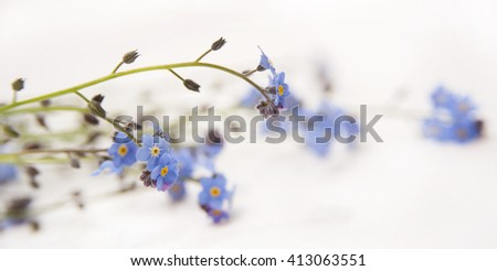 blue flowers on white background. forget me not  - stock photo