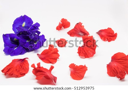 blue flowers Petals and red flowers on a white background.