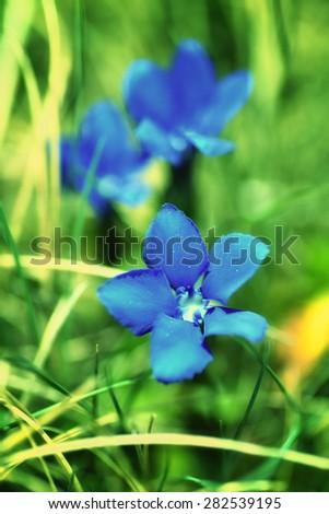 blue flowers, summer - stock photo