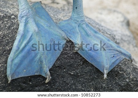 Blue foot - stock photo
