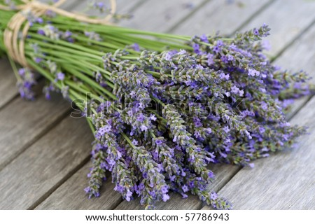 Blue fresh lavender bouquet close-up - stock photo