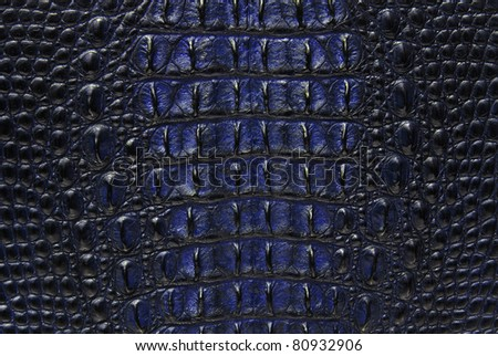 Blue Freshwater crocodile bone skin texture background.