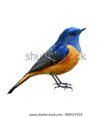 Blue and orange bird logo - photo#25