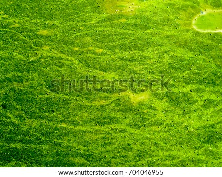 blue green algae stock images royalty free images vectors