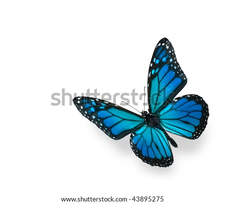 Blue Green Butterfly Isolated on White - stock photo