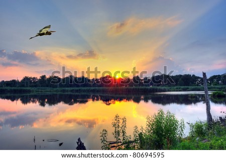 Blue Heron flys over a pond on the Chesapeake Bay in Maryland at sunset - stock photo
